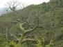 Bosque Cerro Blanco
